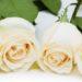 Un especial y merecido homenaje floral de la Floristería del Tanatorio