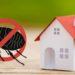 ¿Cómo eliminar las pulgas en casa de forma natural?